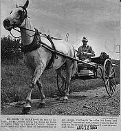 : horse cart