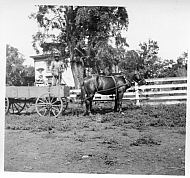 man in wagon, Hilly Farm