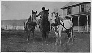 Feagans Horses