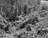 : Car Wreck, Nov 5, 1946