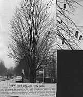 : Peakland Place beer cans trees