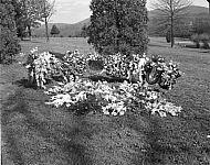 : Grave
