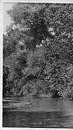 Creek - Trees