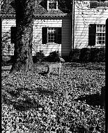 : MRS. TUCKER CARRINGTON, BY ARMS GREYDON, NOVEMBER