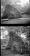 : FALLEN PARK TREES, MILLER PARK, OCTOBER 17